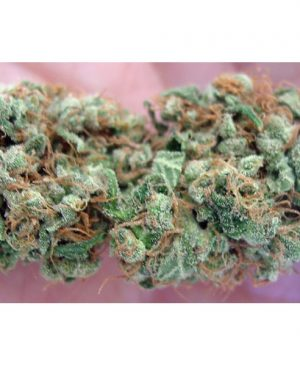 Buy Holy Grail Kush from USA