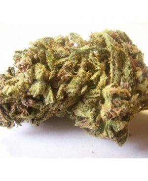 Buy Jack Herer Medical Legal Marijuana Strain Online For Sale