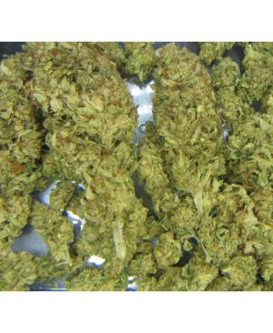 Buy Kosher Kush (Reserva Privada)