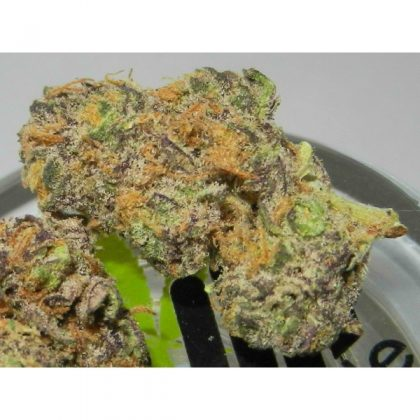 Buy Purple Urkle