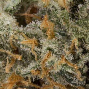 Buy Cracker Jack Marijuana Strain