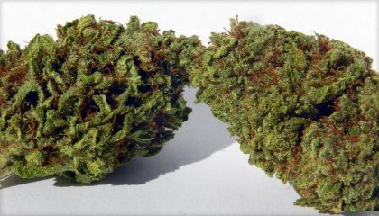 Buy Panama Red medicinal marijuana